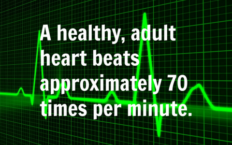 How Many Times Does Your Heart Beat Per Day?